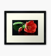 Red Chinese Lantern Framed Print