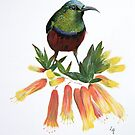 Sunbird by Lynda Harris