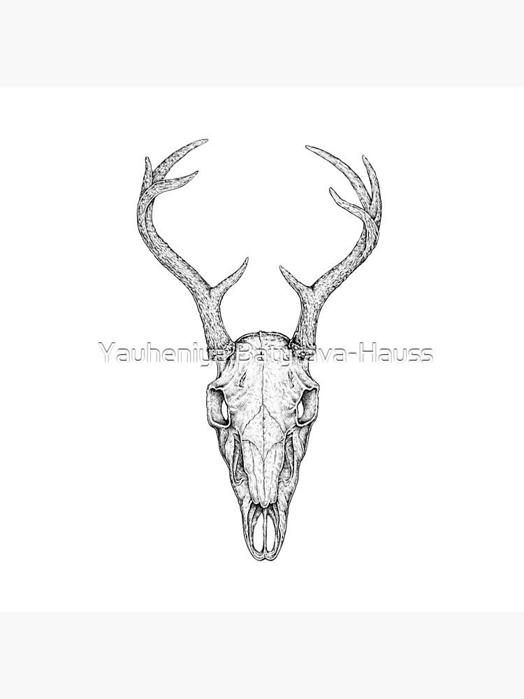 Deer Skull by eugeniahauss