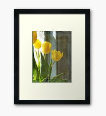 Grunge Yellow Spring Tulips Framed Print