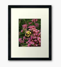 Bumble Bee in Late Summer Framed Print