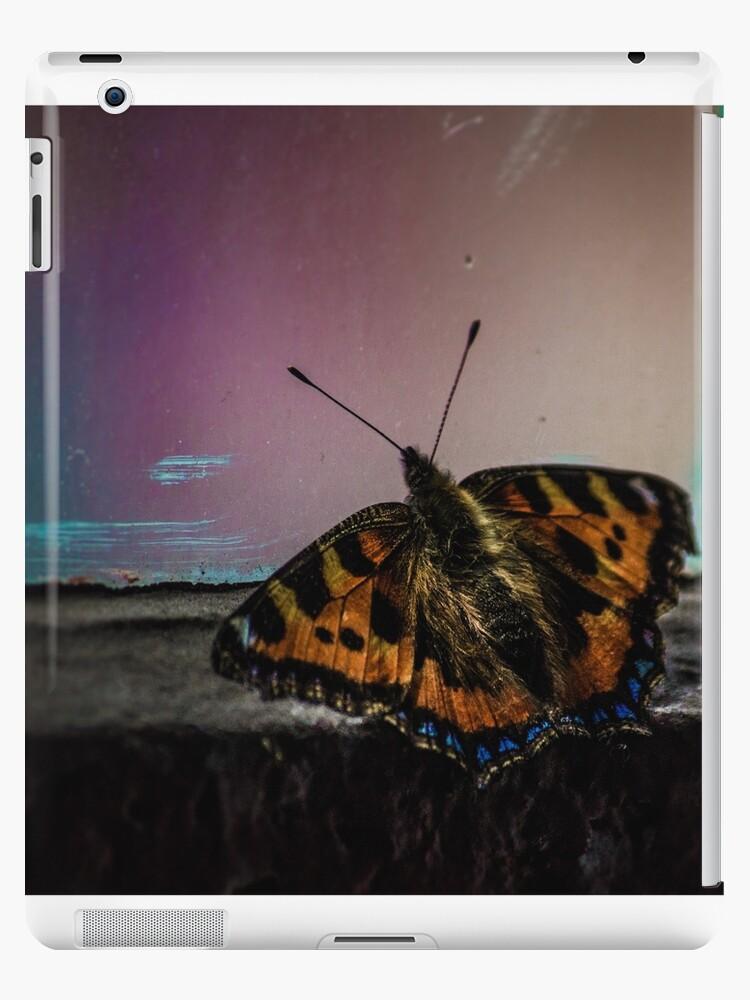 Butterfly by Jack Steel