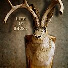 Life Is Short. Stay Wild. 2 by Alex Preiss