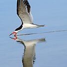 Black skimmer with reflction by Anthony Goldman