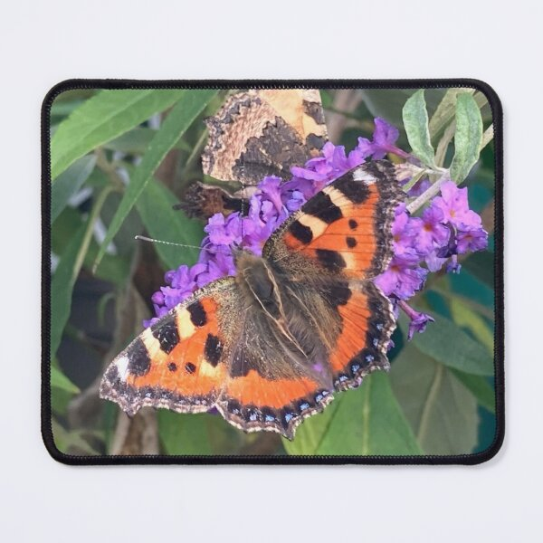 Butterfly on Buddleia Mouse Pad