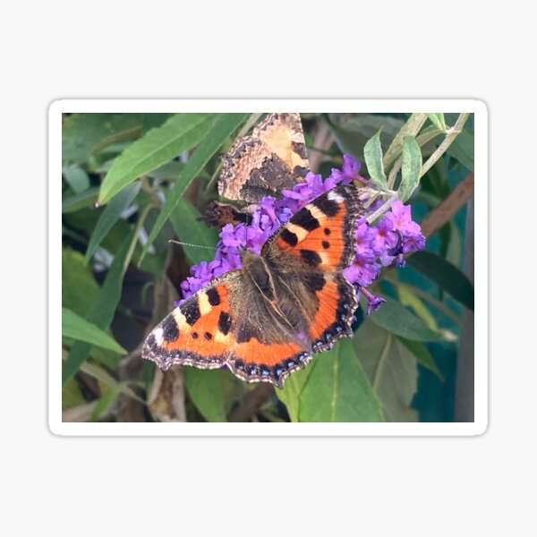 Butterfly on Buddleia Sticker