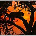 Leopard silhouette by jozi1