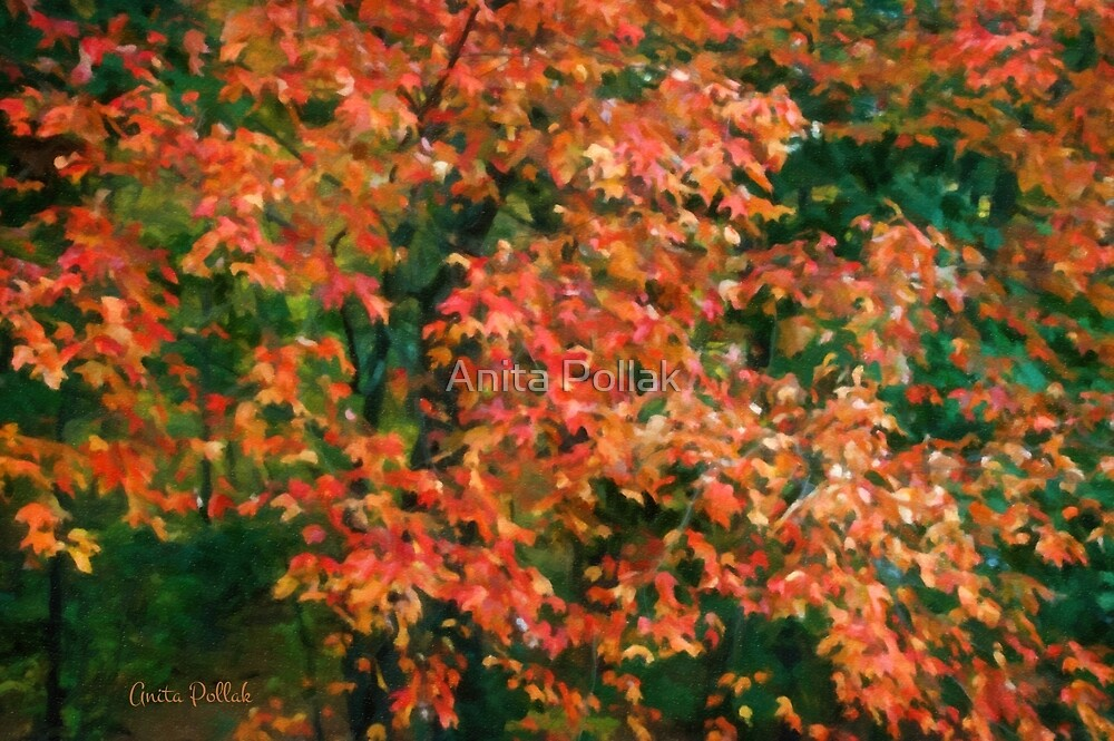 The Beauty of Autumn Out My Window by Anita Pollak