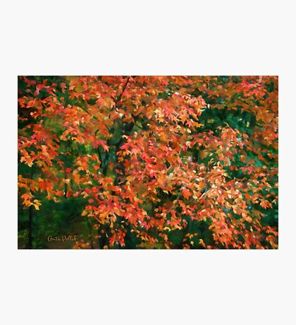 The Beauty of Autumn Out My Window Photographic Print