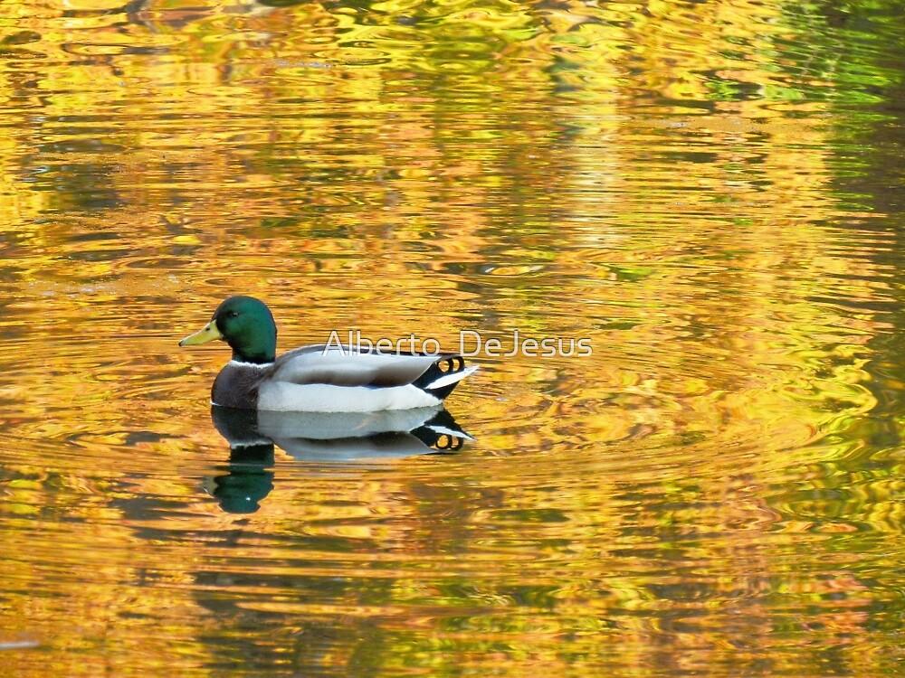 Autumn reflections at Crotona Park, New York City  by Alberto  DeJesus