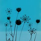 Queen Anne's Lace (blue) by Bethany Helzer