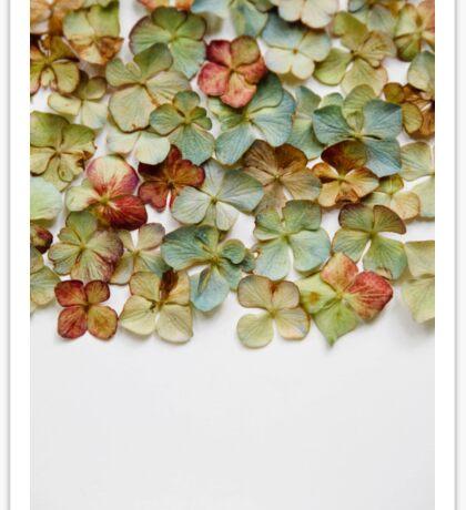 Hydrangea Petals no. 1 Sticker