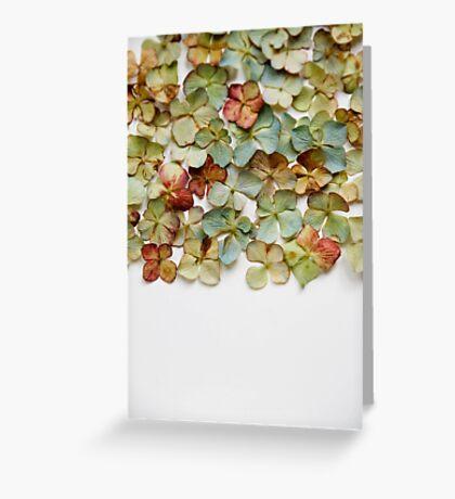 Hydrangea Petals no. 1 Greeting Card