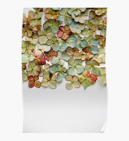 Hydrangea Petals no. 1 Poster