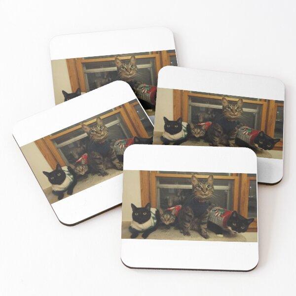 Cats Xmas Coasters (Set of 4)