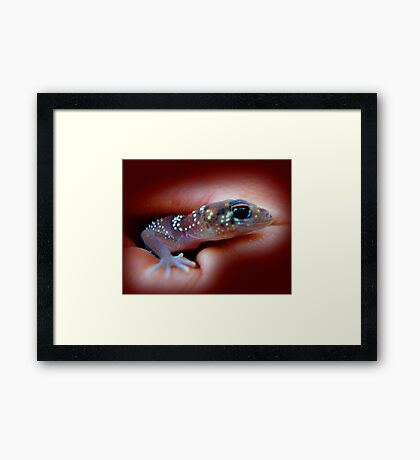 Fat-tailed Gecko Framed Print