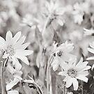 Sun Flowers by Vendla