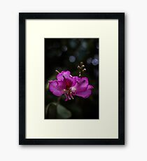 Purple Ebony Framed Print