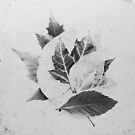 Stacked Leaves by Bethany Helzer