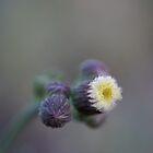 Beautiful ONE by Michelle Lee Blatt
