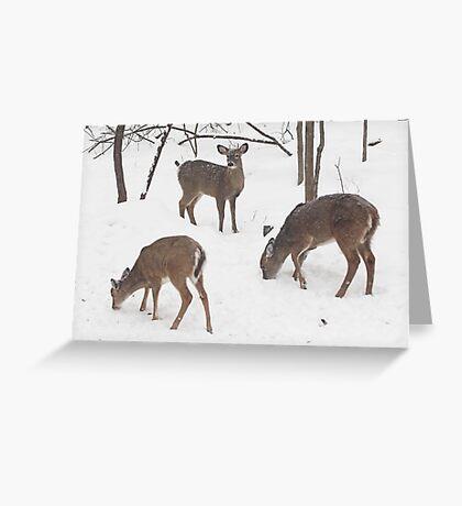 Whitetail Deer In Snowy Woods Greeting Card