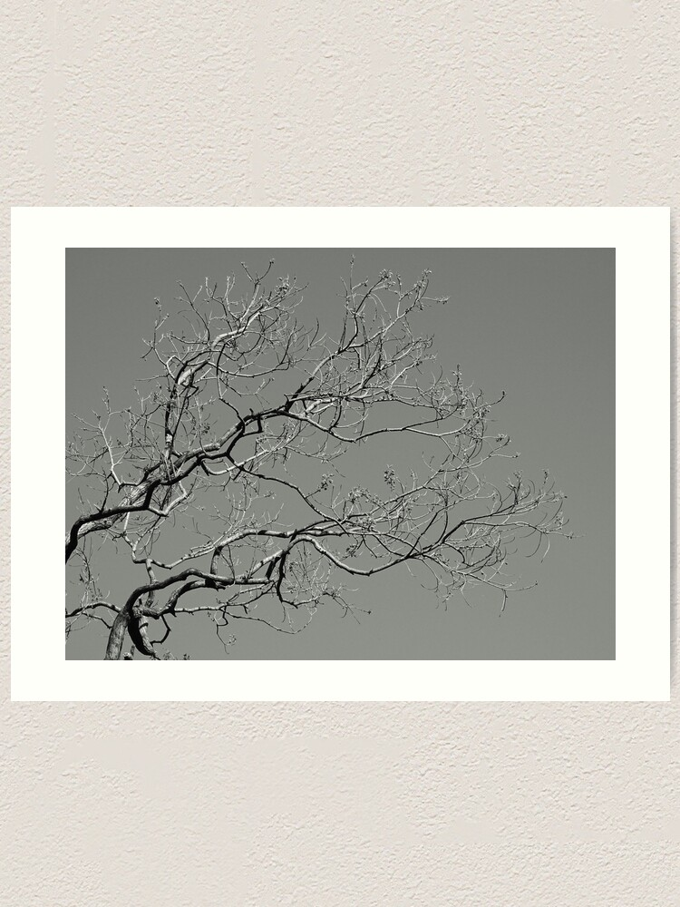 Alternate view of Branches 2021/09/07 Art Print