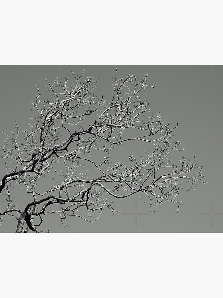 Branches 2021/09/07 by stevenguy