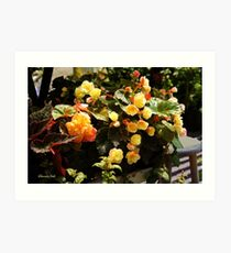 A Passion for Begonias Art Print