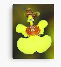 Yellow Orchid Macro Canvas Print