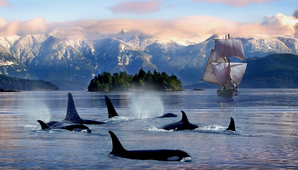 Sail With Sea Wolfs by Cliff Vestergaard