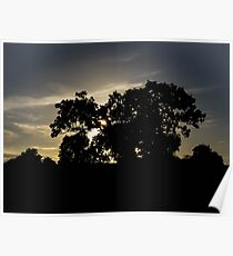 nature shadow Poster