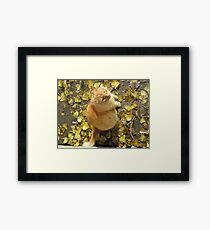 Where's Them Tweets? Framed Print