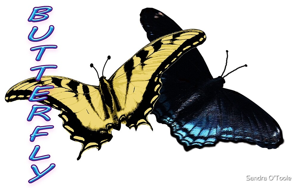 Butterfly by Sandy O'Toole