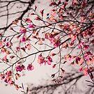 Spring Leaves by Mareike Böhmer