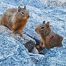 Squirrely Buddies by Sandy O'Toole