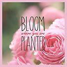 Bloom Where You Are Planted Pink Roses 2 by Beverly Claire Kaiya