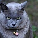 Just a Bit Grumpy! by byronbackyard