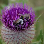 Thistle And Bees by lezvee