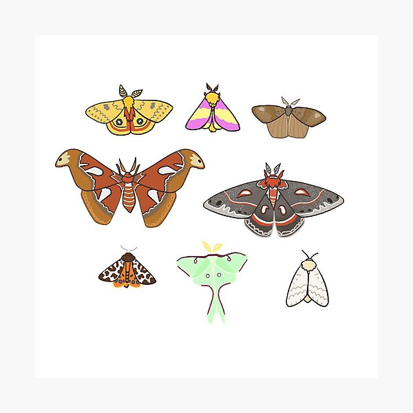 Moths Photographic Print