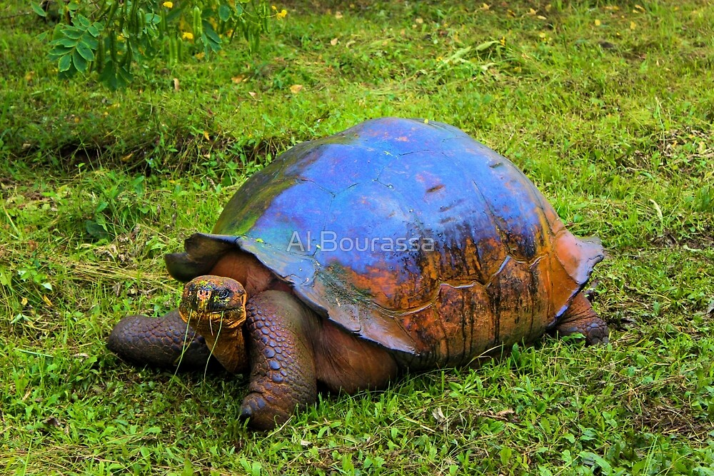 Giant Tortuga On Santa Cruz In The Galapagos by Al Bourassa