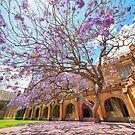Jacaranda at the University of Sydney Quadrangle (Vertical) by Rod Kashubin