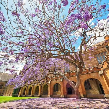 Jacaranda at the University of Sydney Quadrangle (Vertical) by RodKashubin