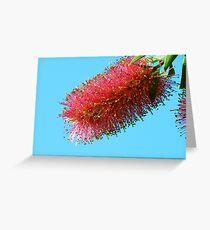 Australian Bottlebrush Greeting Card