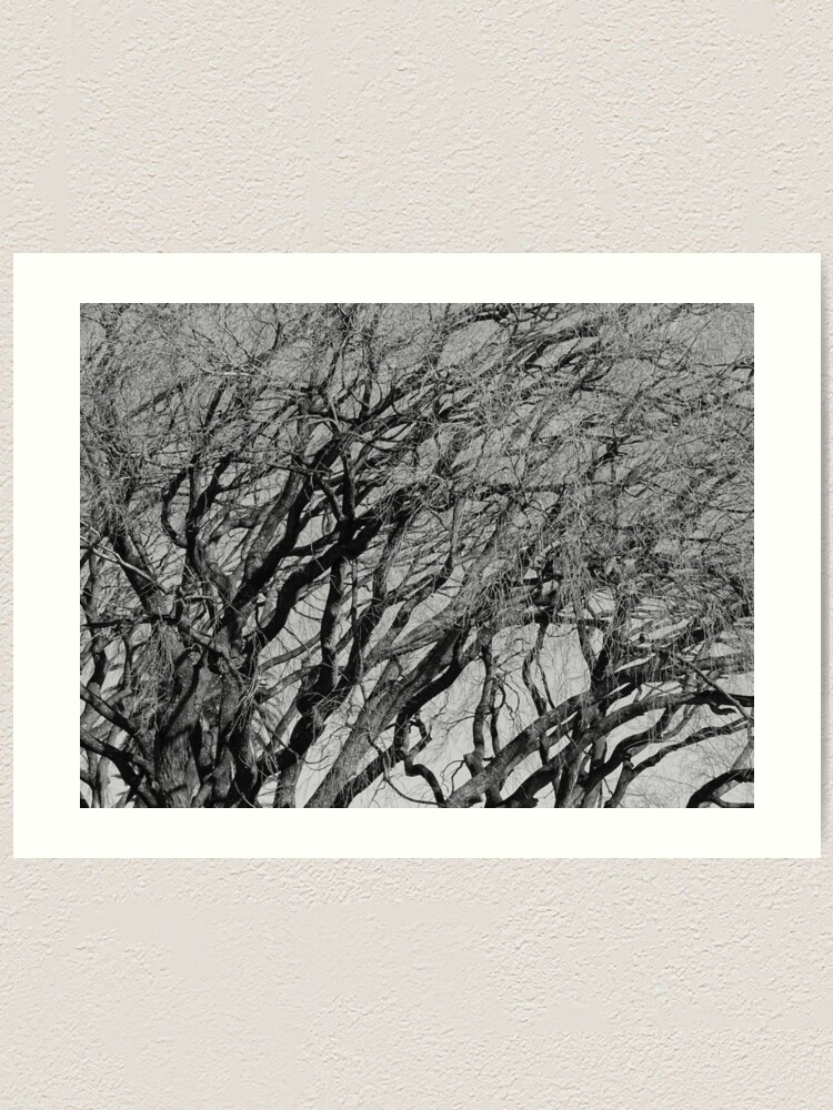 Alternate view of Branches 2021/07/29 Art Print