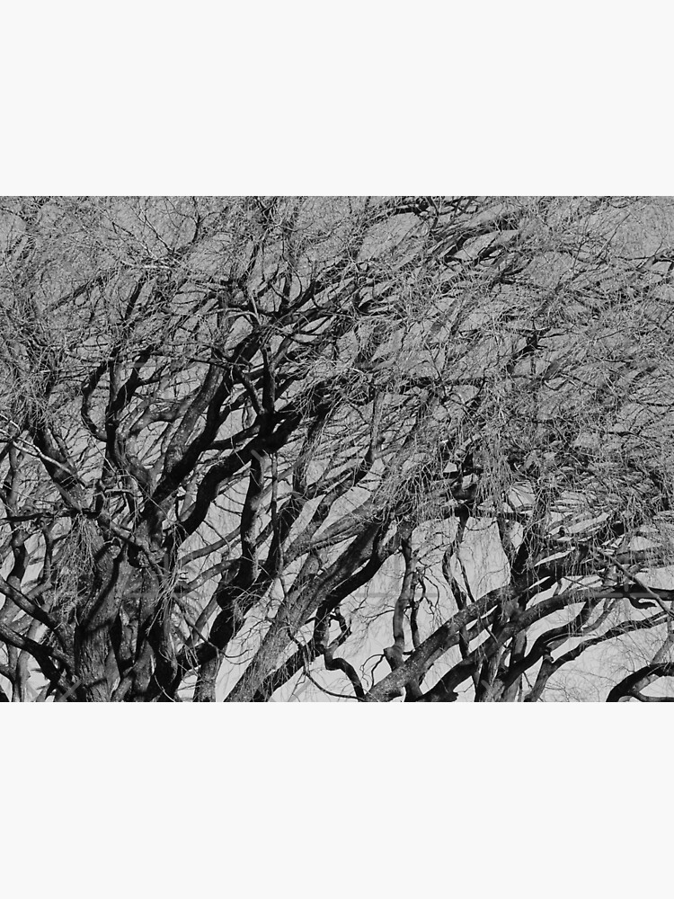 Branches 2021/07/29 by stevenguy