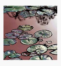 Shining Waterlilies on Pink Photographic Print