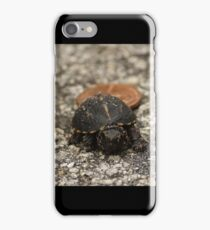 Tiny Baby Box Turtle iPhone Case/Skin