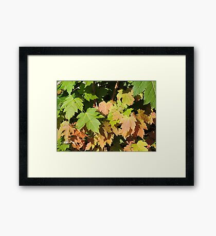 Autumn Is A Second Spring Framed Print
