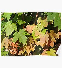 Autumn Is A Second Spring Poster