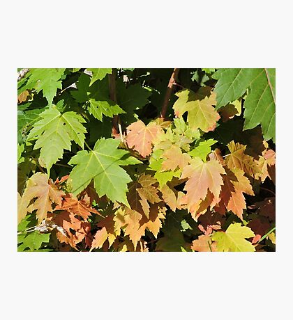 Autumn Is A Second Spring Photographic Print